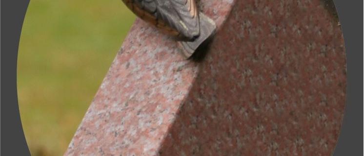 Närbild på en metallfågel på gravstenens kant